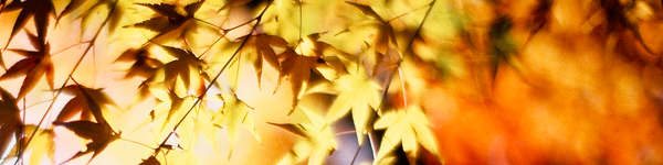 banner-autumn-leaves
